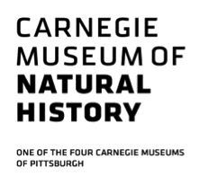 Carnegie Museum of Natural History Photograph